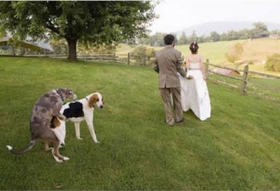 Cães roubando a cena em casamento (Foto: Divulgação)